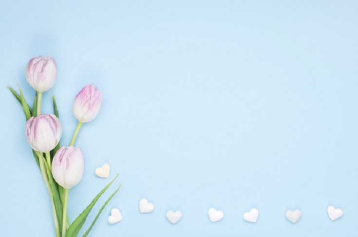 White Tulips for sorry messages